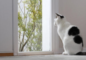 HOW TO TRAIN A CAT TO USE A CAT DOOR