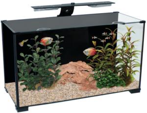 Salient Features of Aqua One Fish Tanks