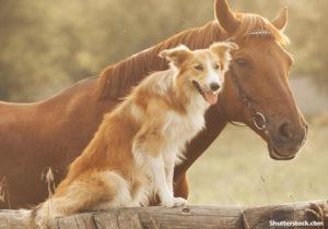 SPIRITUALITY AND ANIMAL CONNECTION