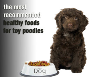 Be Aware Of The Most Recommended Healthy Foods For Toy Poodles