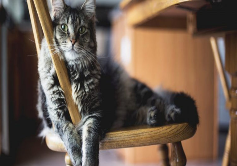 Cat Flaps – Convenience for Cats and Their Owners
