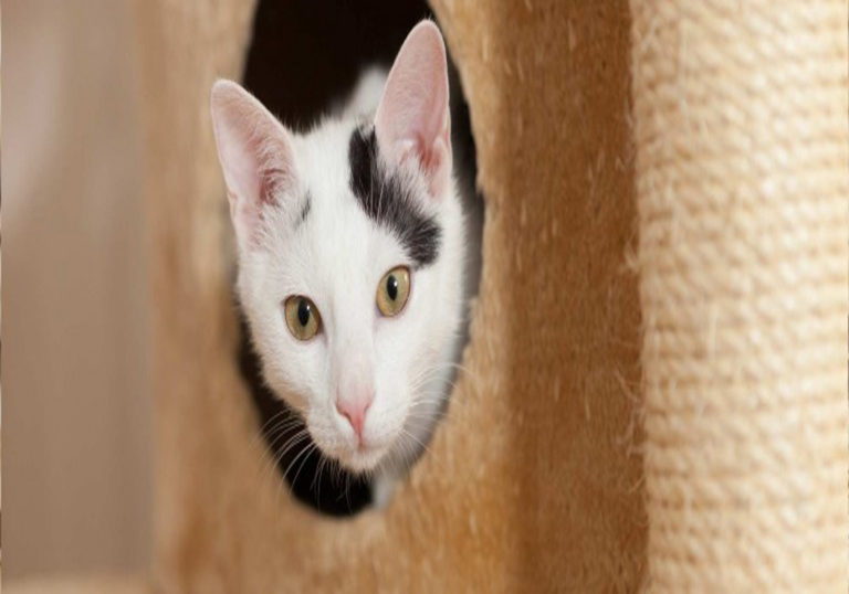 Tips on how to Home Train a Cat