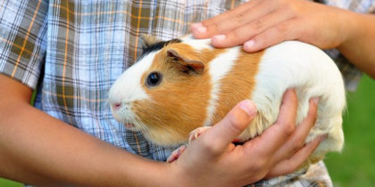 ARE GUINEA PIGS GOOD PETS?