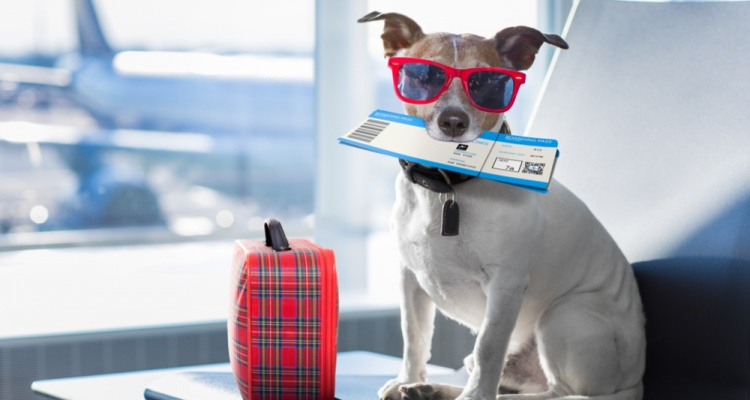 All About Getting Ready For a Trip With Your Pet
