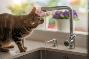 Avoiding Pet Holiday Hazards - 5 Answers That Will Keep Your Pet Safe