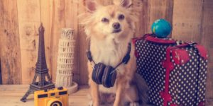 Bringing Your Dogs On Planes - Exactly What People Should Know