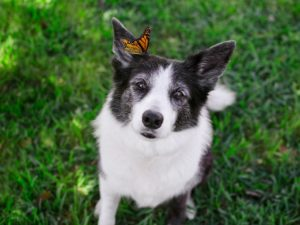 Rescued Dogs Are Angels In Disguise
