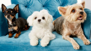Shedding Pets - Ways to Reduce the Amount of Pet Hair in Your Home