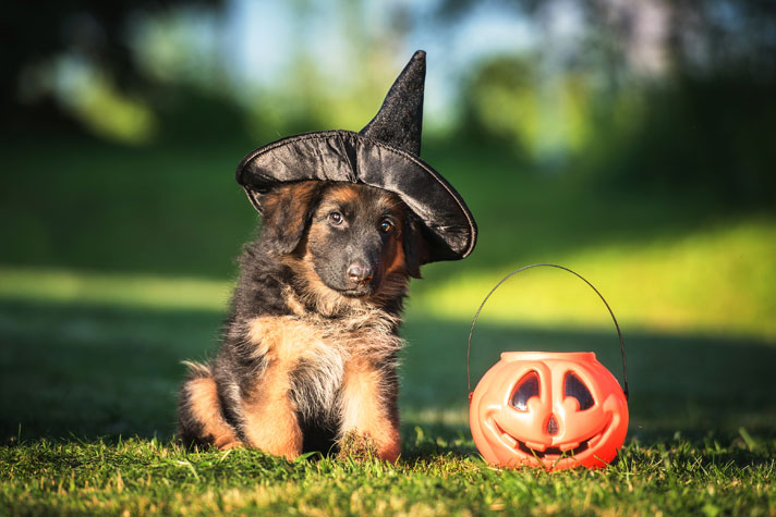 Spooky Pets For Halloween