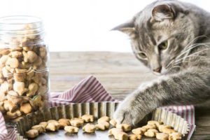 Treat Your Kitty With These 3 Cat Food Recipes