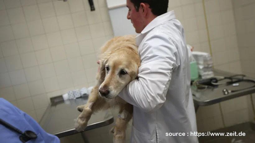 Die Karriere Eines Tierarztes