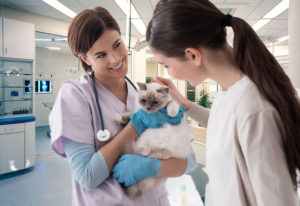 Why the Animal Hospital Is Important for Your Pet