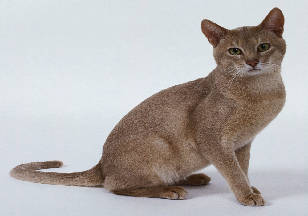 Common Cat Skin Diseases and Their Causes