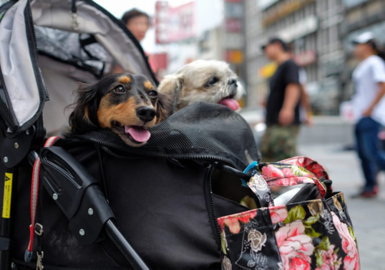 Gearing Your Next Promotion to Pets Is a Likely Choice