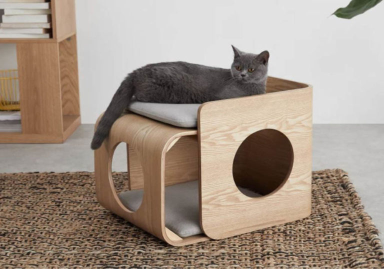 Pet Accessories For Your Cat