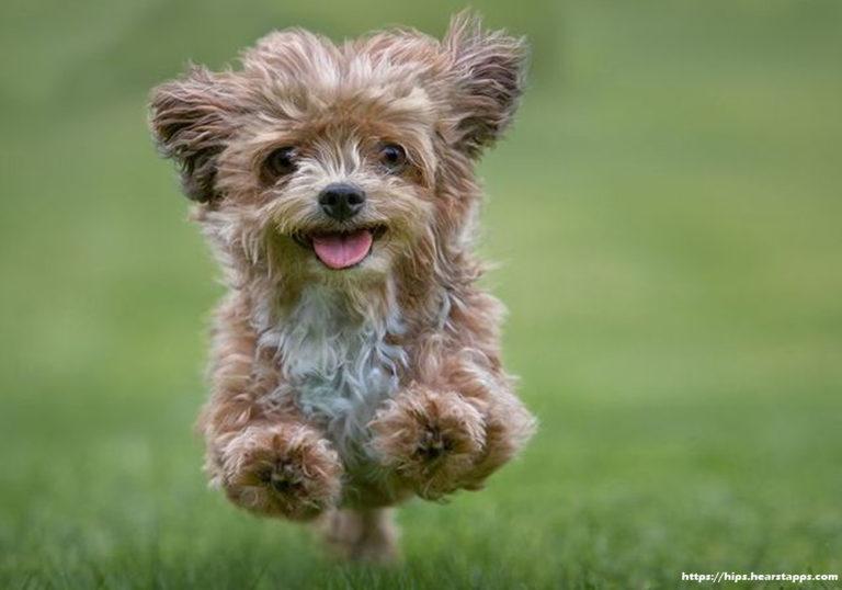 Show Off Man's Best Friend With Designer Dog Accessories