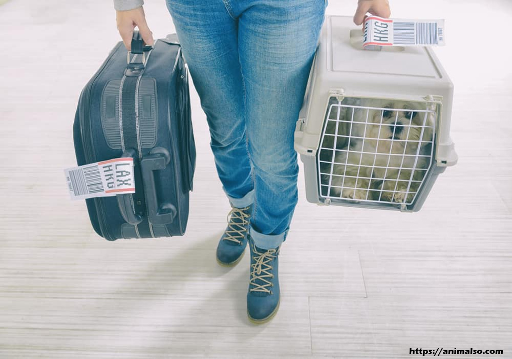 Choosing Pet Carriers That Are Approved by Airlines