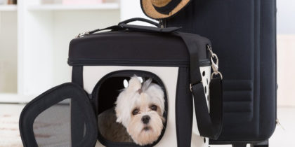 Choosing the Perfect Pet Carrier