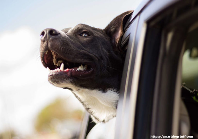 Five Easy Tips on How to Properly Transport Your Dog