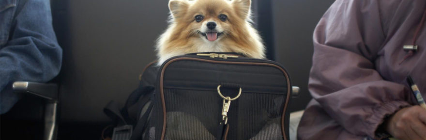 Making Sure That Your Pet Transportation Plans Go Smoothly This Vacation