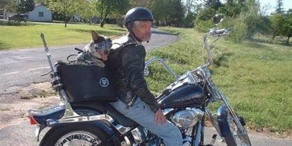 Motorcycle Pet Carrier - Tips To Avert Likely Dangers