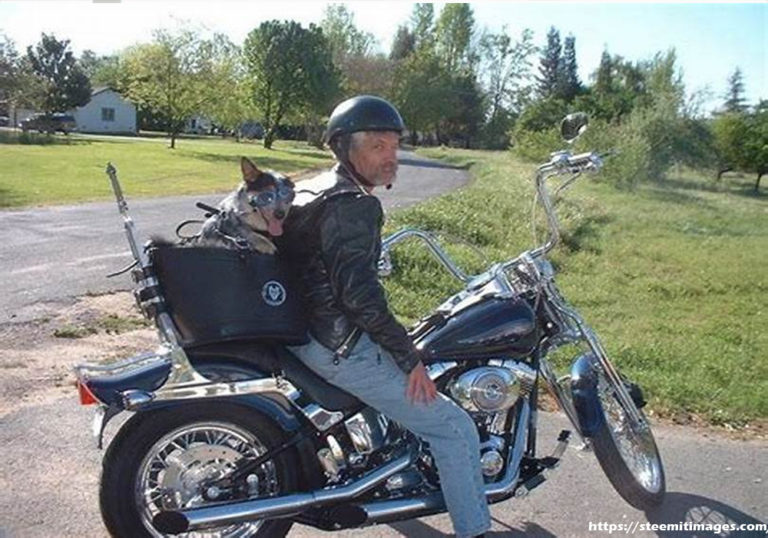 Motorcycle Pet Carrier – Tips To Avert Likely Dangers