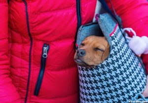 Purchasing the Perfect Pet Carriers for Your Dog