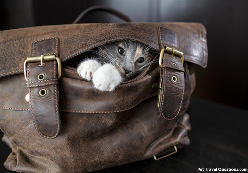 Selecting the Best Small Pet Airline Carrier