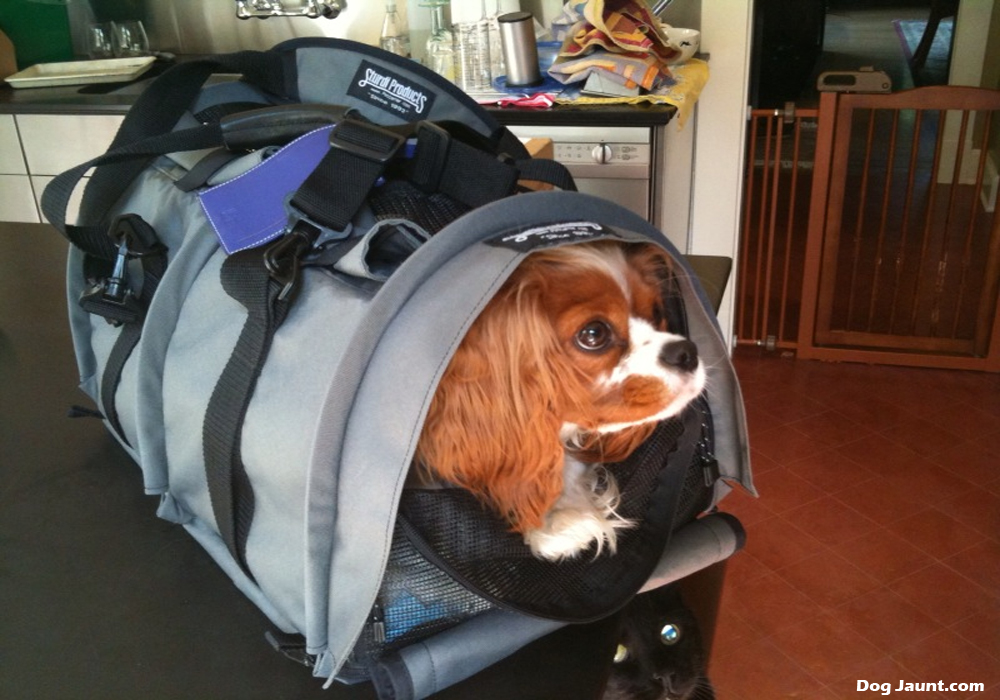 The Sherpa Pet Carrier Backpack - A Hands-Free Approach to Dog Carriers