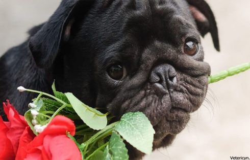 10 Tips to Showing Your Pet Some Love This Valentine's Day