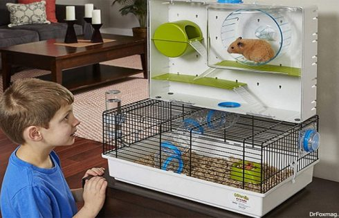A Parent's Guide – Avoiding Danger and Death within the Hamster Cage