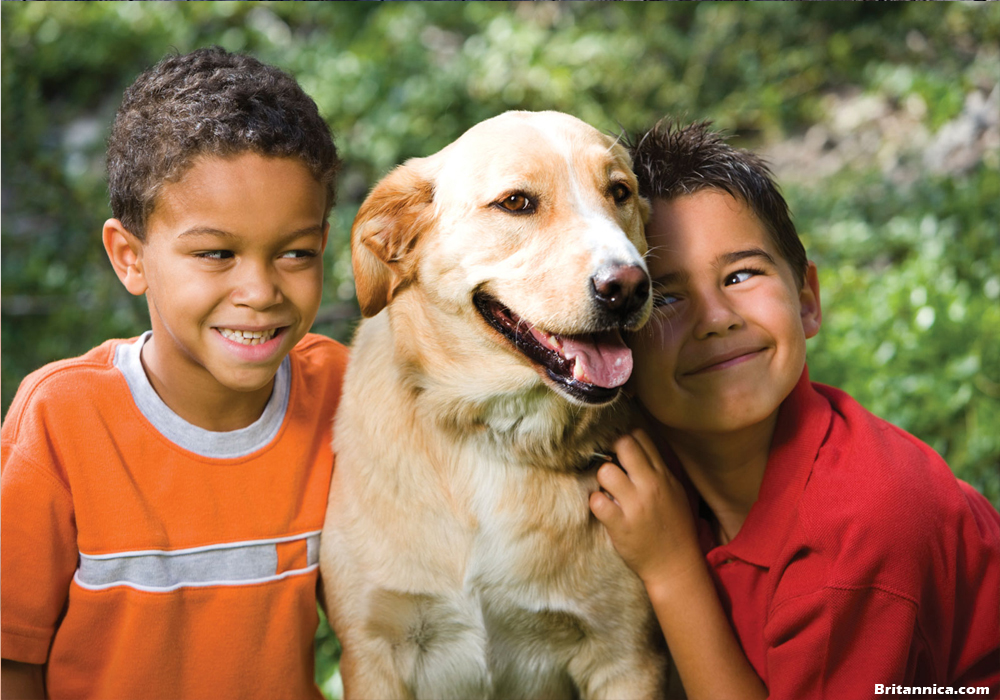 Animal Care Knowledge For Kids