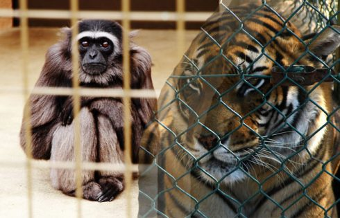 Crucial Details around the Care of Exotic Animals