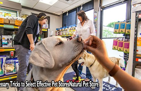 3 Necessary Tricks to Select Effective Pet Stores