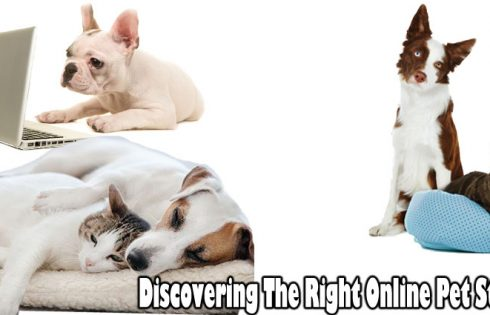 Discovering The Right Online Pet Store