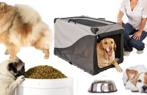 Guidelines in Deciding upon the most beneficial Pet Stores