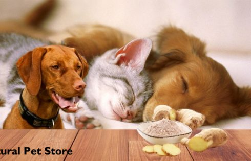 Natural Pet Store: How Can 1 Benefit Your Dogs, Cats, and also other Pets?