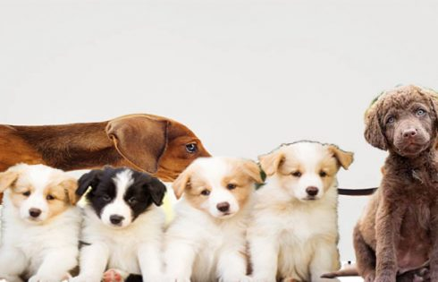 Concerns To Ask Oneself Just before Breeding Your Dog