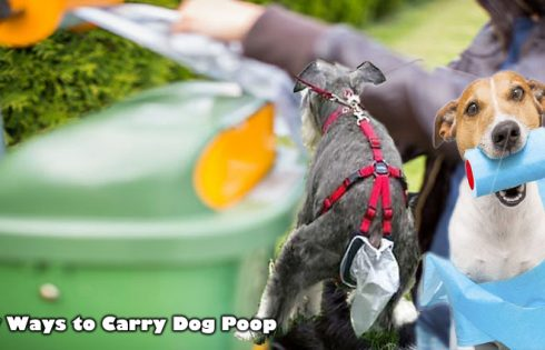 New Ways to Carry Dog Poop