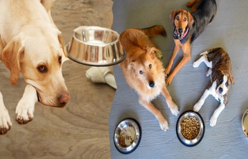 Dog Diet program – Finding Your Companion On A Dog Diet regime Can Save Him Or Her From A Painful, Early Death!
