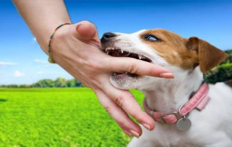 5 Ways You Can Stop Bad Behaviours in Dog
