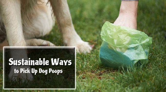5 Sustainable Ways to Pick Up Dog Poops