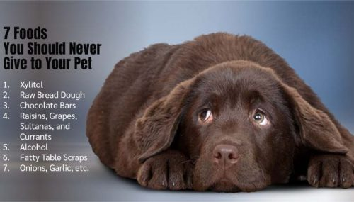 7 Foods You Should Never Give to Your Pet